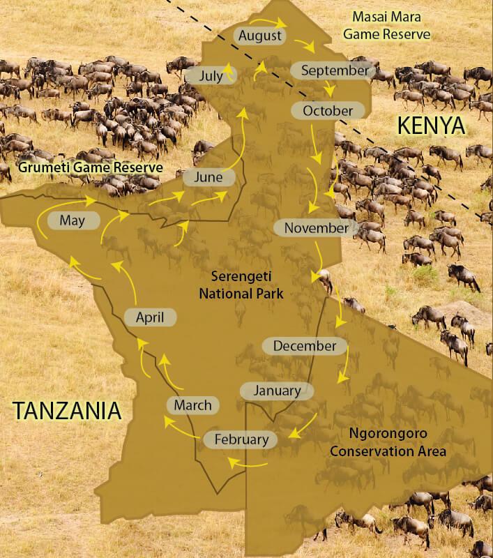 serengeti_wilderbeasts