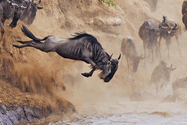migration safaris river crossing